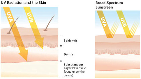 UV Radiation and the Skin, Broad-Spectrum Sunscreen